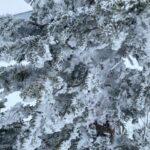 Минивэн в аэропорт со сноубордом