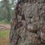 Карельские леса